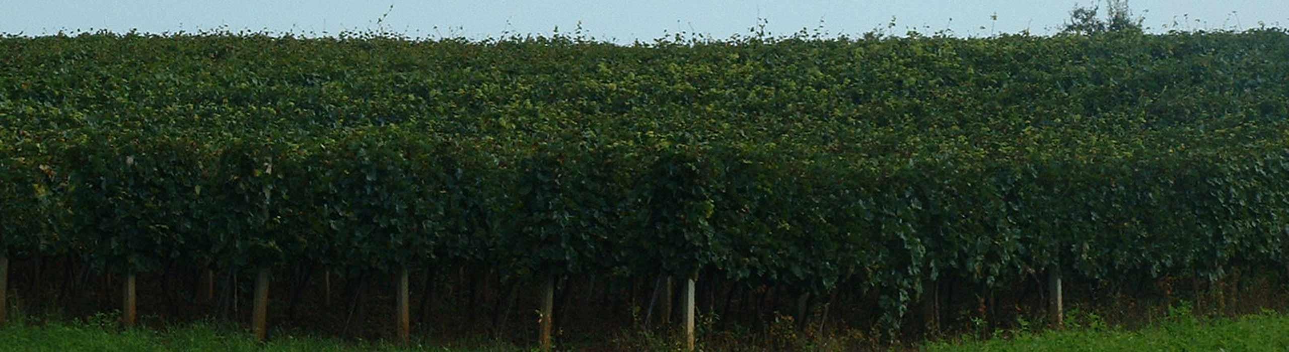 Viteško vino – Župa